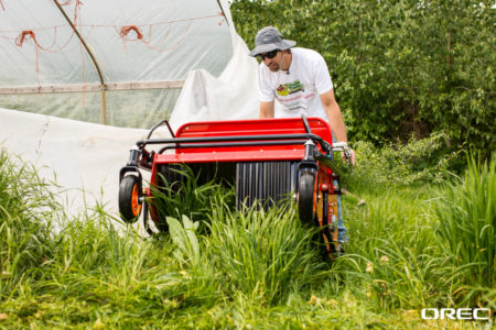 How to mow underneath trees  Mow brush and tall grass under trees