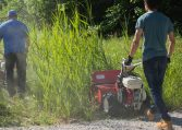 Walk Behind Brush Mower Tall Grass